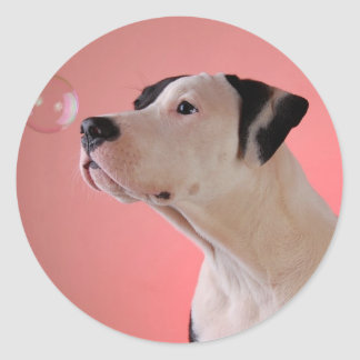 Curious pup round stickers