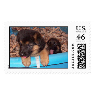 Curious Pups Postage Stamp