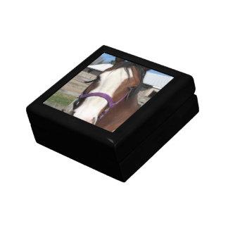 Curious Quarter Horse  Gift Box