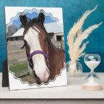 Curious Quarter Horse  Plaque