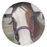 Curious Quarter Horse  Plate