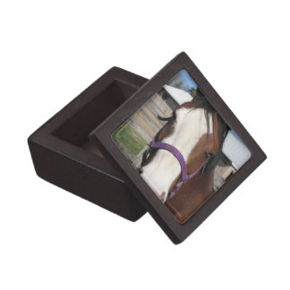 Curious Quarter Horse Premium Gift Box