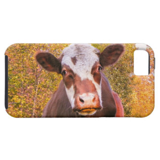 Curious Red Cow iPhone SE/5/5s Case