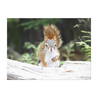 Curious Red Squirrel Canvas Print