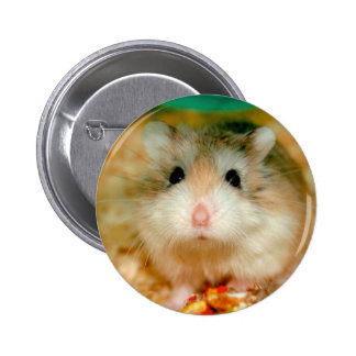 Curious Roborovski Hamster Button