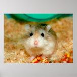 Curious Roborovski Hamster Poster