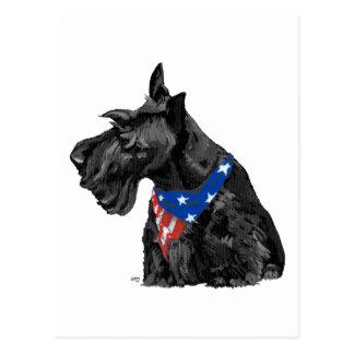 Curious Scottish Terrier Patriotic Postcard