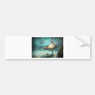 Curious sea lion Galapagos underwater Bumper Sticker