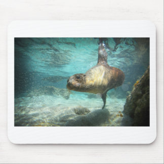 Curious sea lion Galapagos underwater Mousepad