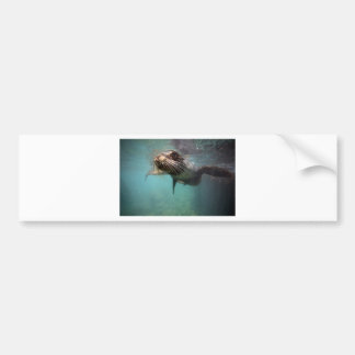 Curious sea lion underwater Galapagos Islands Bumper Sticker