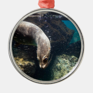 Curious sea lion underwater Galapagos Islands Christmas Ornament
