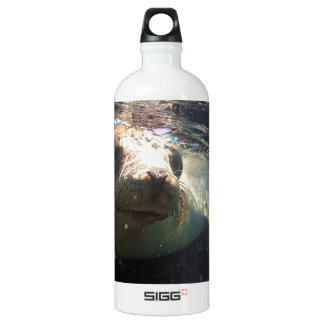 Curious sea lion underwater Galapagos Islands Water Bottle