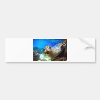 Curious sea lion underwater Galapagos paradise Bumper Sticker