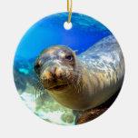 Curious sea lion underwater Galapagos paradise Ceramic Ornament