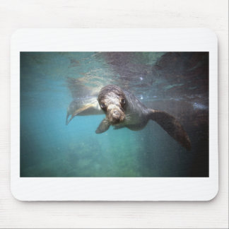 Curious sea lion underwater mouse pad