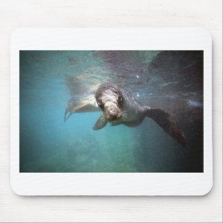 Curious sea lion underwater mousepads