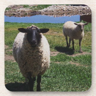 Curious Sheep Beverage Coaster
