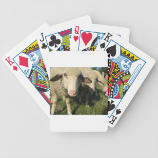 Curious sheep bicycle playing cards