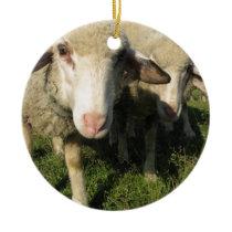 Curious sheep ceramic ornament