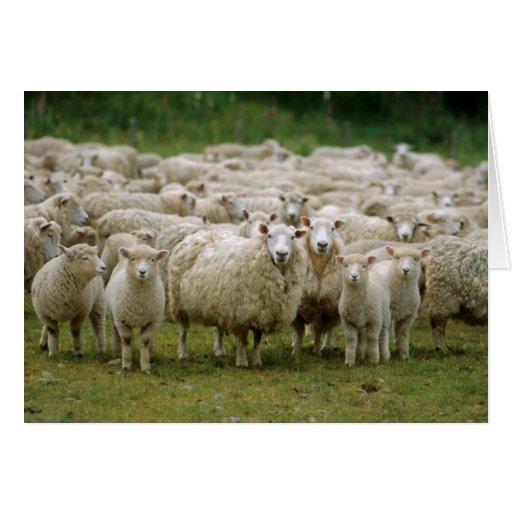 Curious Sheep Greeting Card