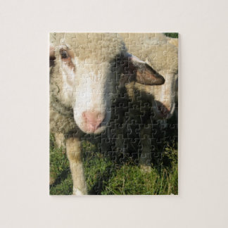 Curious sheep jigsaw puzzle