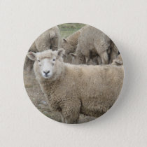 Curious Sheep Pinback Button