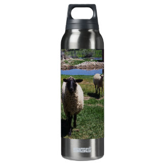 Curious Sheep SIGG Thermo 0.5L Insulated Bottle