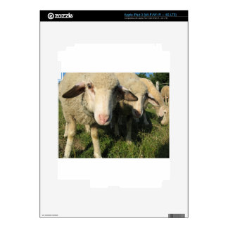 Curious sheep skin for iPad 3