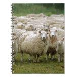 Curious Sheep Spiral Notebook