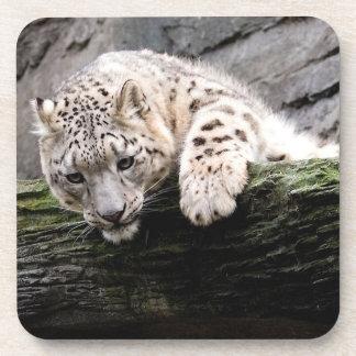 Curious Snow Leopard Coaster