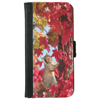 Curious squirrel in autumn tree iPhone 6/6s wallet case