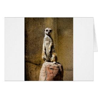 Curious Standing Meerkat - Suricata suricatta Card