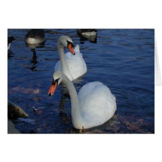Curious Swan card