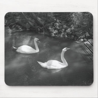 Curious Swans Mousepad