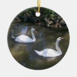 Curious Swans Ornament