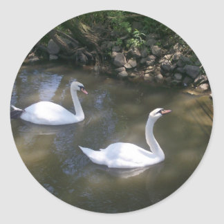 Curious Swans Stickers