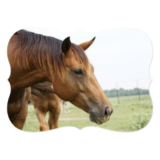 Curious Thoroughbred 5x7 Paper Invitation Card