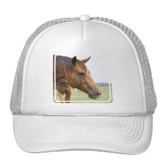 Curious Thoroughbred Baseball Hat