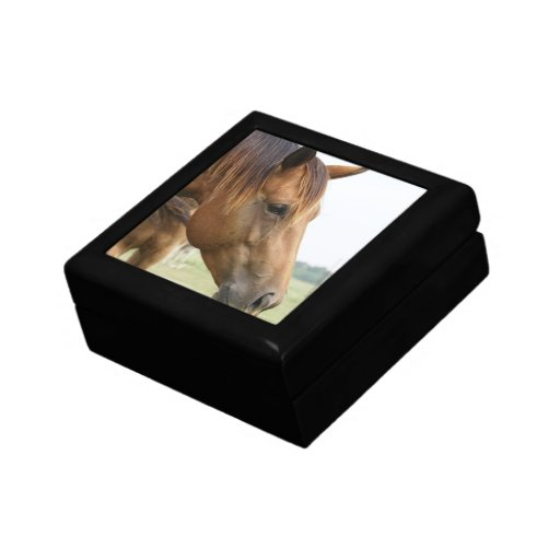 Curious Thoroughbred  Gift Box