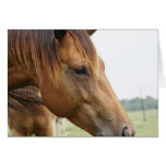 Curious Thoroughbred Greeting Card