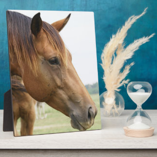 Curious Thoroughbred Plaque