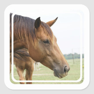 Curious Thoroughbred Stickers