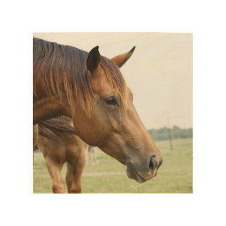 Curious Thoroughbred Wood Prints