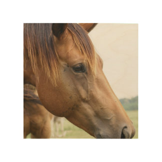 Curious Thoroughbred Wood Canvases