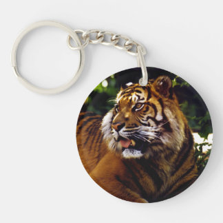 Curious Tiger Keychain