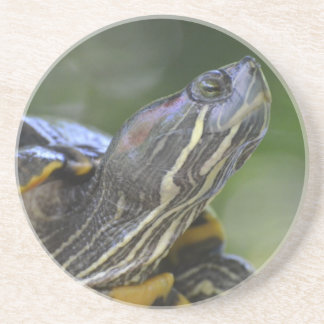 Curious Turtle Coasters