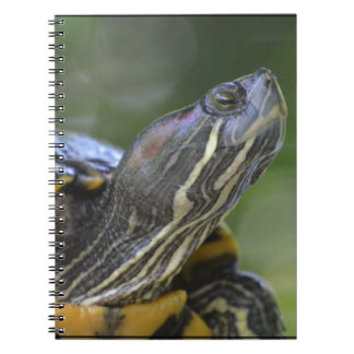 Curious Turtle Spiral Notebook