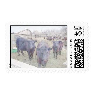 Curious Young Black Angus Postage Stamp