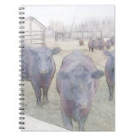 Curious Young Black Angus Spiral Note Book