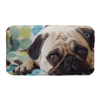 curious young pet iPhone 3 cases